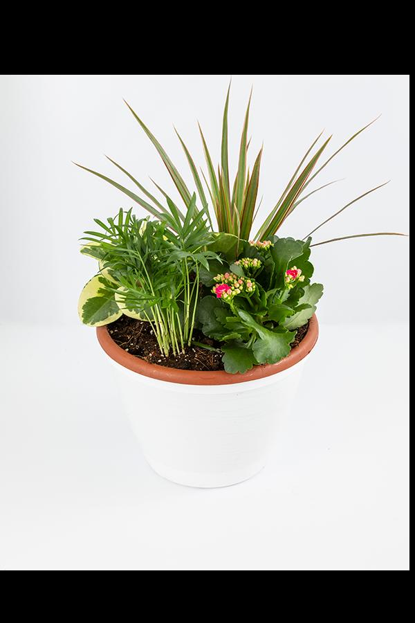 קוקטייל צמחים משודרג